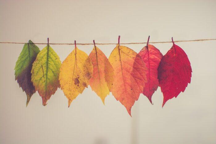 変化する葉っぱ